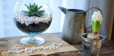 terrarium roslinne